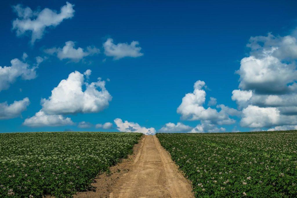 青空の下1本にのびる道と畑