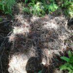 イノシシの出産用ベッド(巣)