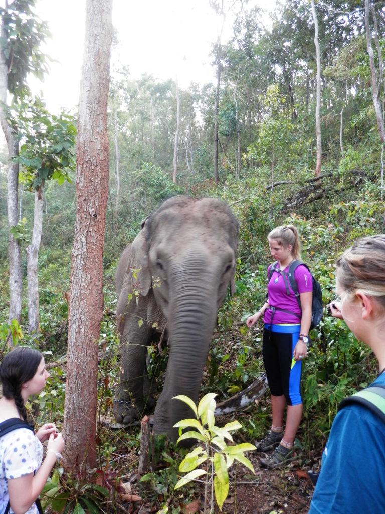アジアゾウの健康チェックをするボランティア