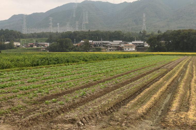 東近江市の大きな畑