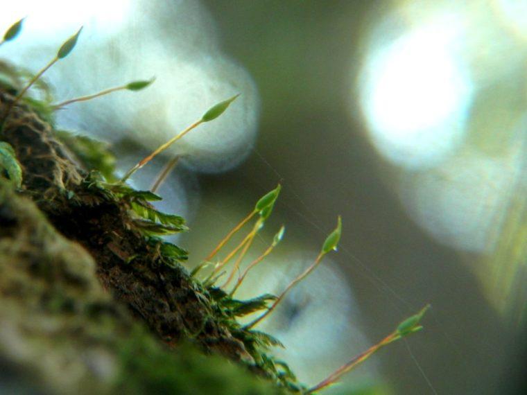 苔が胞子を飛ばす様子