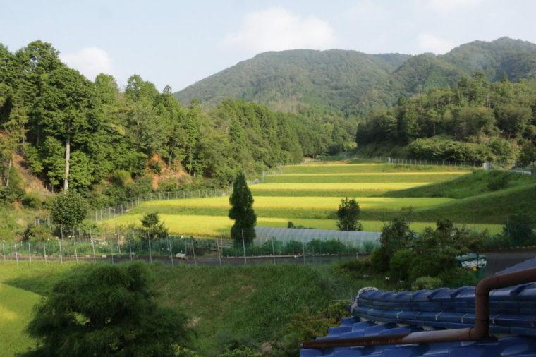 田んぼが広がる景色