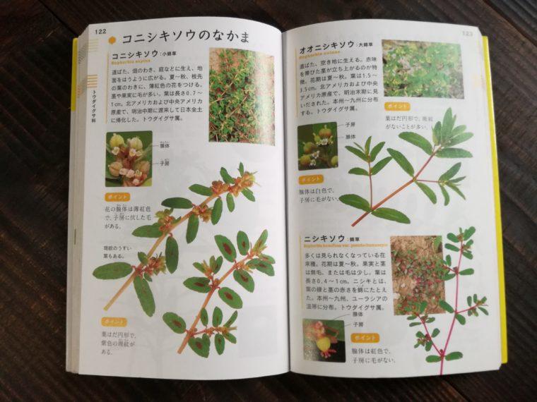 花と葉で見わける野草 コニシキソウの仲間