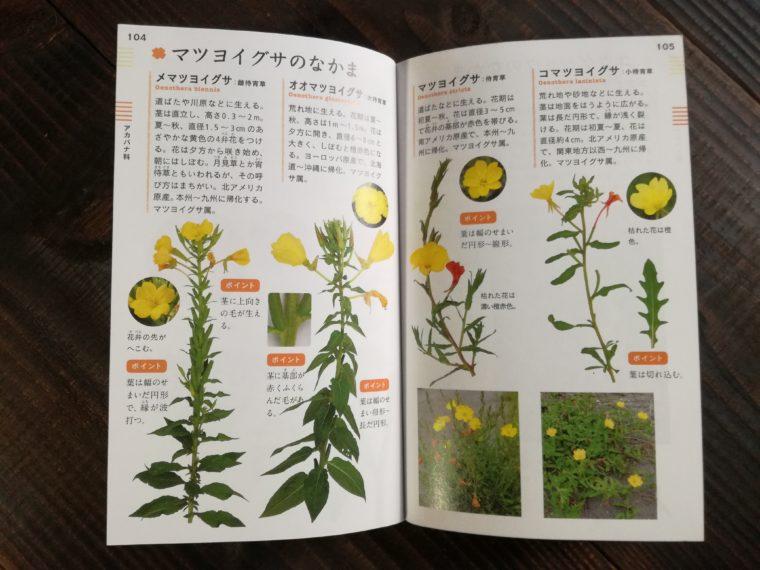 花と葉で見わける野草 マツヨイグサ