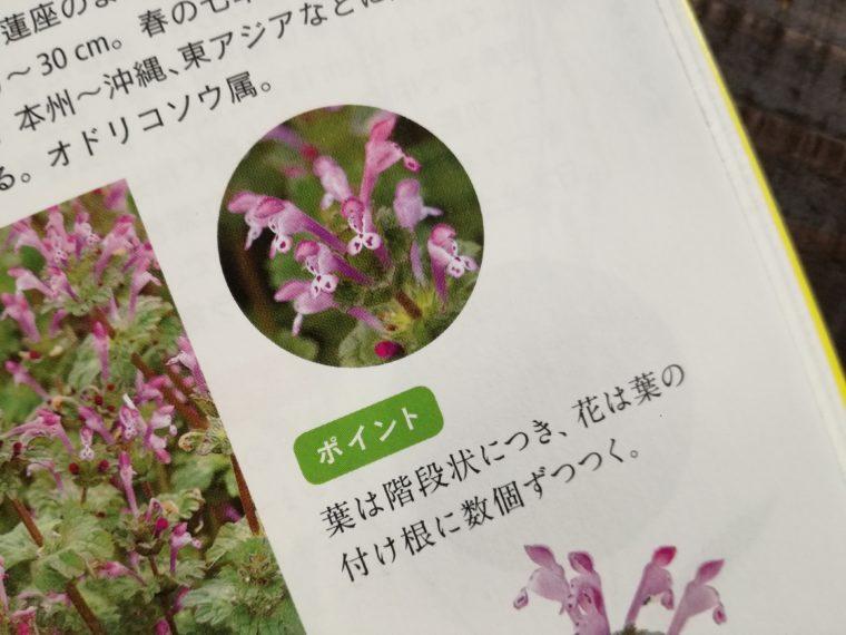 花と葉で見わける野草 ホトケノザの花