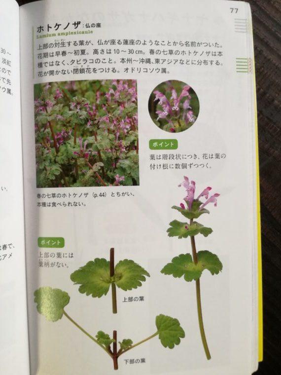 花と葉で見わける野草 ホトケノザ