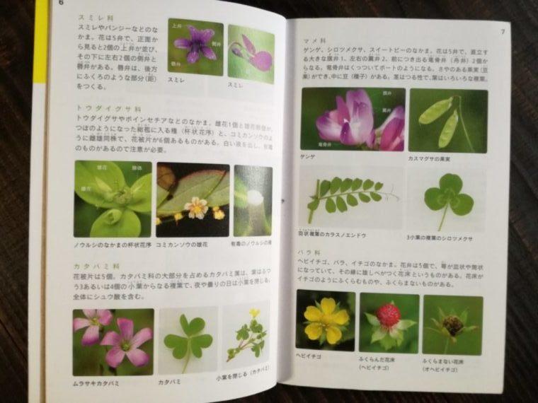 花と葉で見わける野草 科ごとの特徴