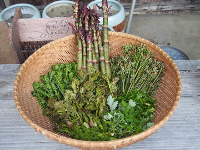 かごいっぱいの山菜