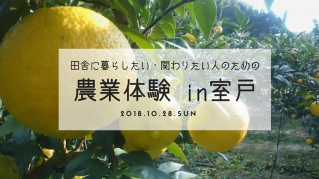 農業体験in室戸 日南(ひなた)地区 ゆず収穫体験